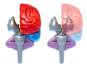 episodic ataxia (cerebellum)